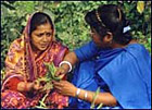 Harvesting plants for Ayurvedic treatments